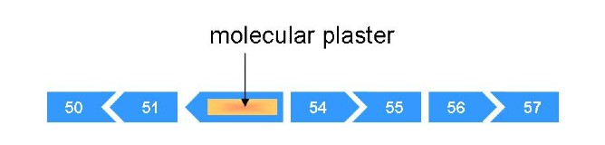 a molecular plaster over exons 52 and 53